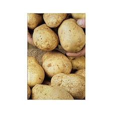 Potatoes Rectangle Magnet