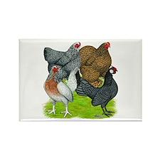 Bantams Assorted Hens Magnets