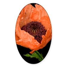 Poppy (Papaver sp.) Decal