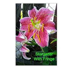 Stargazer With Fringe Postcards (Package of 8)