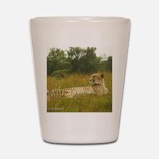 Relaxing Cheetah Shot Glass