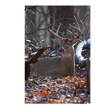 Bedded Buck D1342-021 Postcards (Package of 8)