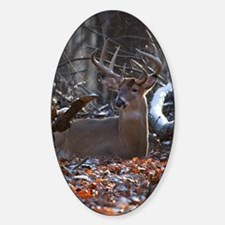 Bedded Buck D1342-021 Decal