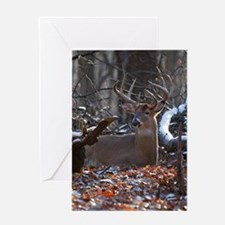 Bedded Buck D1342-021 Greeting Card
