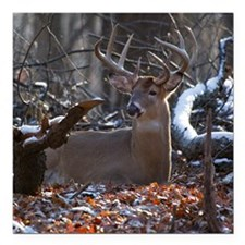 """Bedded Buck D1342-021 Square Car Magnet 3"""" x 3"""""""