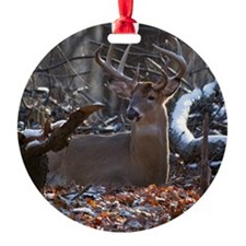 Bedded Buck D1342-021 Ornament