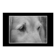 Golden Retriever Postcards (Package of 8)