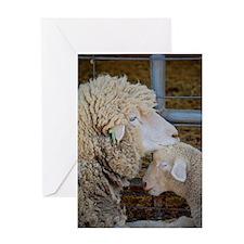 Stomper  Lamb Award Photo Greeting Card