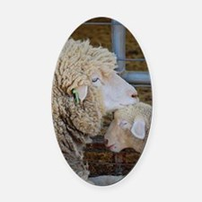 Stomper  Lamb Award Photo Oval Car Magnet