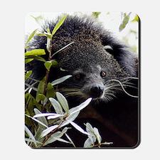 005Bearcat Mousepad