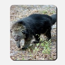 003Bearcat Mousepad