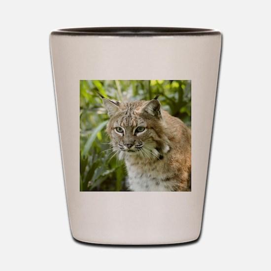 BobcatBCR010 Shot Glass
