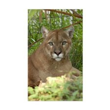 Cougar 016 Decal
