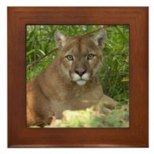 Cougar 016 Framed Tile