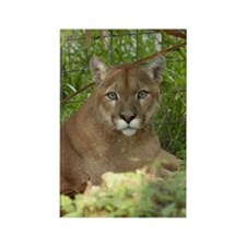 Cougar 016 Rectangle Magnet