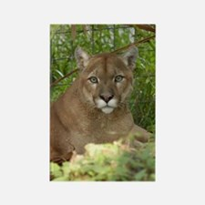 Cougar 016 Rectangle Magnet