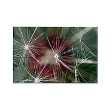 Dandelion Seed Head Rectangle Magnet