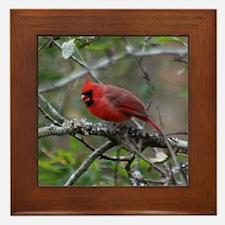 Cardinal on Apple Tree Framed Tile