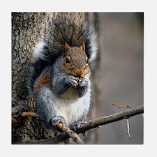 Squirrel #269-1 03-15-09 Bisset Park Tile Coaster