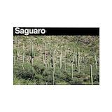 Saguaro magnet 10 Pack