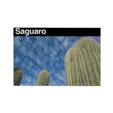 Saguaro NP v2 Rectangle Magnet (100 pack)