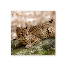 "geoffroy-cat-024 Square Sticker 3"" x 3"""