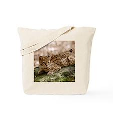 geoffroy-cat-024 Tote Bag