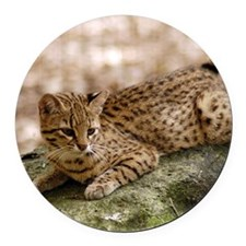 geoffroy-cat-024 Round Car Magnet