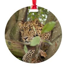LeopardCheetaro001 Ornament