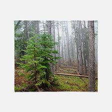 Mist in pine forest Throw Blanket