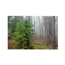 Mist in pine forest Rectangle Magnet