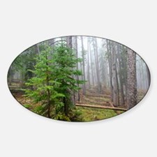 Mist in pine forest Decal