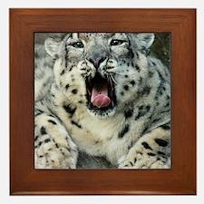 SnowLeopardBCR007 Framed Tile
