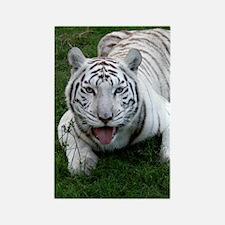 White tiger 014 Rectangle Magnet