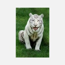 White tiger 018 Rectangle Magnet