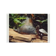 Turtle: What are you looking at?  Rectangle Magnet