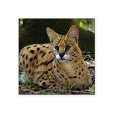 "serval 041 Square Sticker 3"" x 3"""