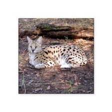 "serval 042 Square Sticker 3"" x 3"""