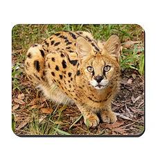 serval 043 Mousepad