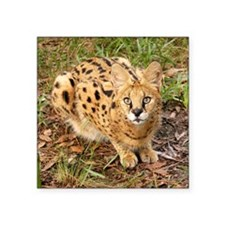 "serval 043 Square Sticker 3"" x 3"""