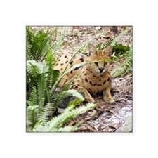 "serval 047 Square Sticker 3"" x 3"""