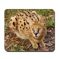 serval 045 Mousepad