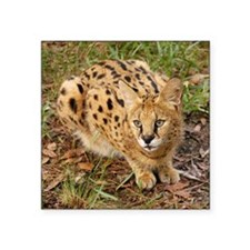 "serval 045 Square Sticker 3"" x 3"""