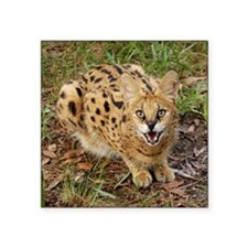 "serval 044 Square Sticker 3"" x 3"""