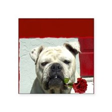 "I Love you bulldog card Square Sticker 3"" x 3"""