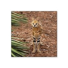 "serval 046 Square Sticker 3"" x 3"""