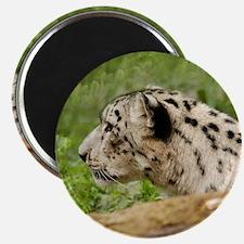SnowLeopardBCR010 Magnet
