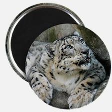 SnowLeopardBCR006 Magnet
