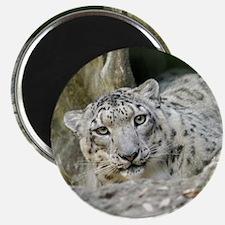 SnowLeopardBCR013 Magnet
