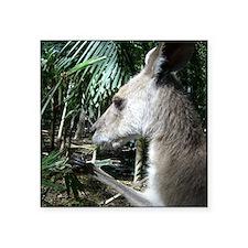 """Australia wallaby Square Sticker 3"""" x 3"""""""